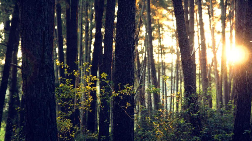 Waldbewirtschaftung und Durchforstung
