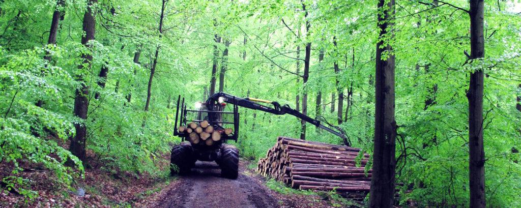 holzrücken saarholz